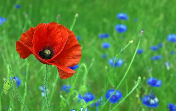 Remembrance Day services this weekend